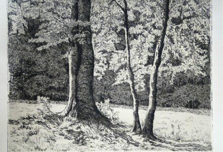 Lichtspiel unter Bäumen